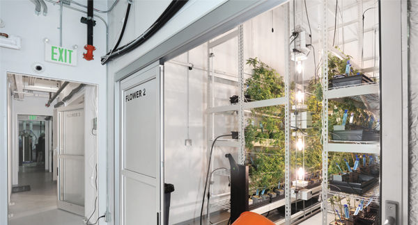Flowering Room for Cannabis Cultivation - PortaFab